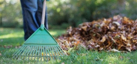 Garden Care General Garden Care In May - Cutting Edge Autumn